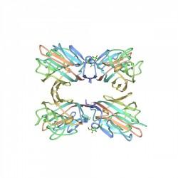 Fitohemaglutinina PHA-L...
